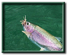 Rainbow trout with Chernobyl Ant fly pattern